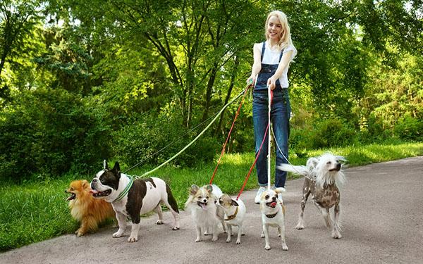 Köpek Gezdirerek Para Kazanma
