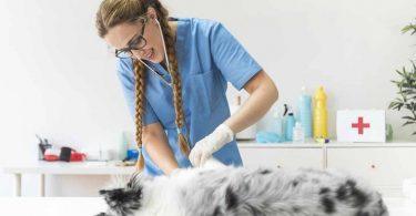 veteriner hekimlik nedir